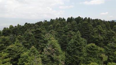 Natural Pine Forest Hilltop Aerial