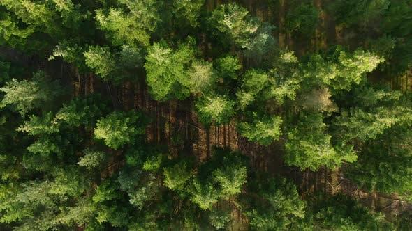 Thumbnail for Drohne über üppigen grünen Wald