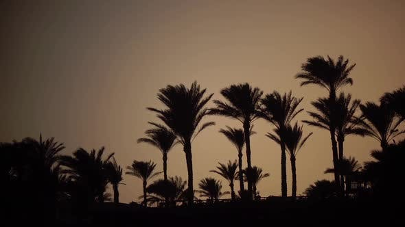 Thumbnail for Sunrise on the Beach Around the Ocean and Palm Trees