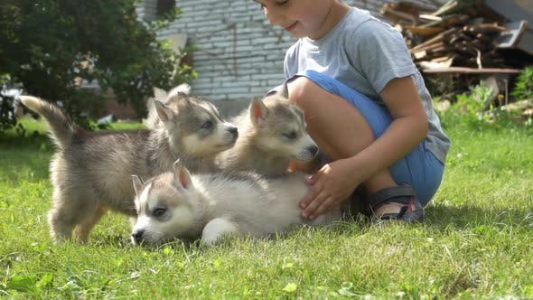 A cute little boy holds a husky puppies and then they run away on a grass