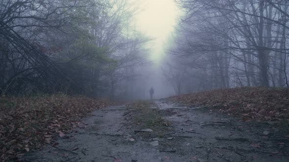 Lonely Man with Walking Sticks and Backpack Wandering in Foggy Rainy Forest