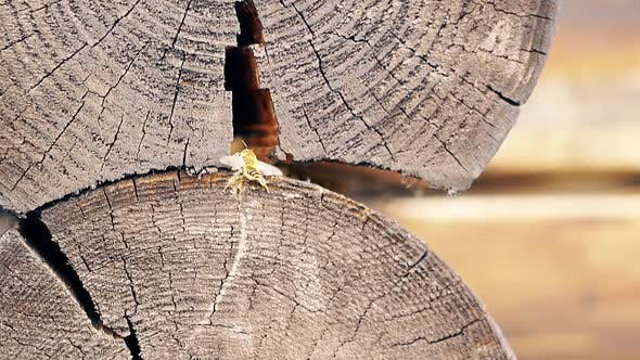 Macro, Slow Motion: The Bee Builds a Nest, Between the Logs, in the Summer House. He Cleans His