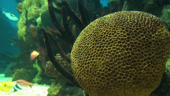 Thumbnail for Underwater Colorful Tropical Fishes and Beautiful Corals