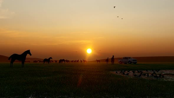 Thumbnail for Herd of Wild Horses With Sunset View