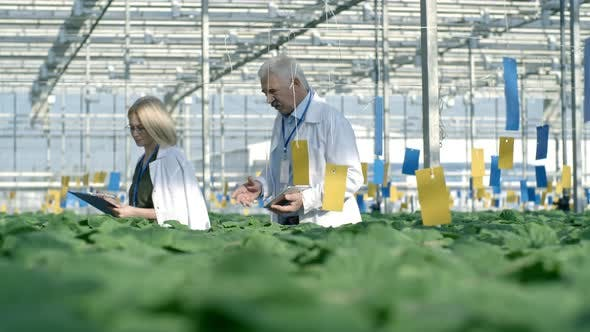 Cover Image for Male and Female Agronomists Walking in Greenhouse