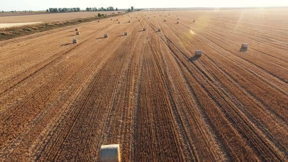 Thumbnail for Aerial Shot of an Arty Wheat Field with a Lot of Large Rolls of Straw in Summer