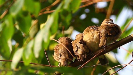 Thumbnail for Sleepy Birds With Sound
