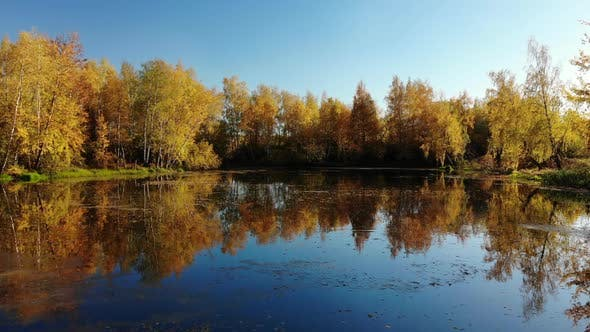 Thumbnail for Russian Autumn Landscape with Birches, Pond and Reflection