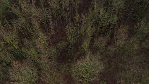 Luftaufnahme eines Waldes im Winter, in dem viele Bäume wegen eines schweren Sturms gefühlt wurden