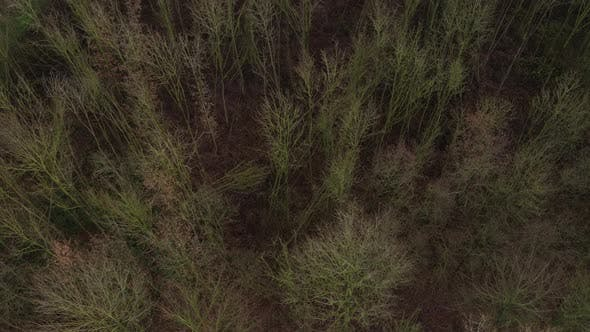 Aerial view of a forest in winter in which many trees have been felt because of a heavy storm