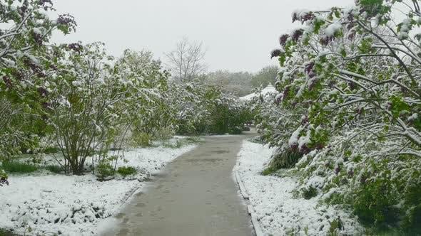 Thumbnail for Spring Park During a Snowfall