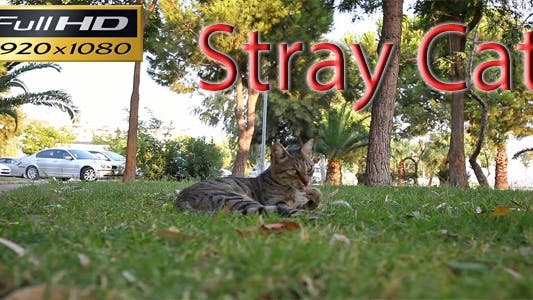 Thumbnail for Stray Cat