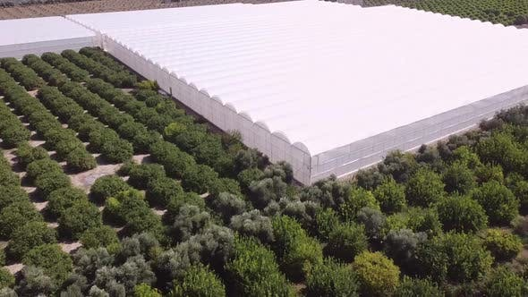 Olive groves and large greenhouse. Aerial view of rural agricultural area