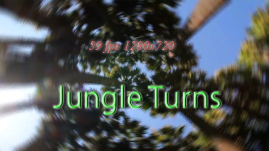 Thumbnail for Jungle  Turns