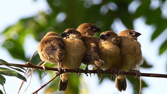 Sleepy Birds Pack 2 - (2-Packs)