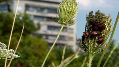 Interesting Bugs