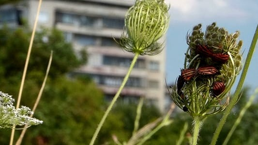 Thumbnail for Interesting Bugs