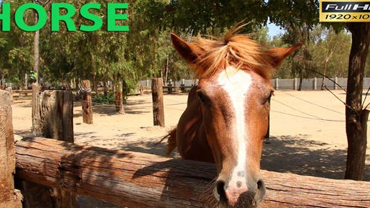 Thumbnail for Horse