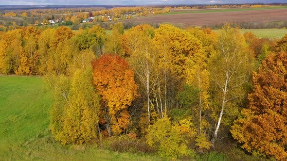 Thumbnail for Autumn Forest and Fields in the Countryside. Trees with Yellow Foliage in the Fall. Autumn Landscape