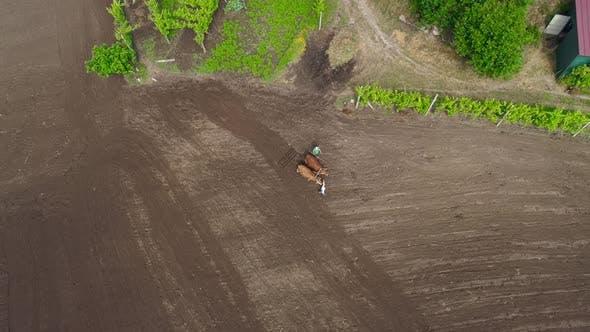 Farmer Plow Fields With Oxen