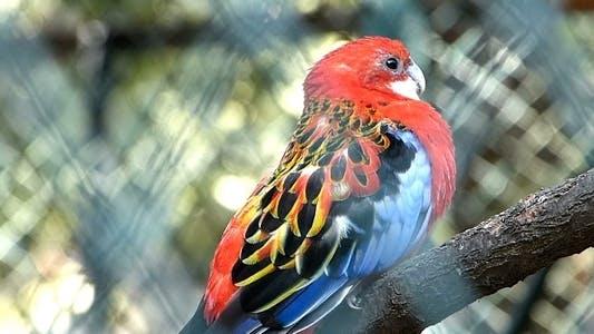 Parrot 4