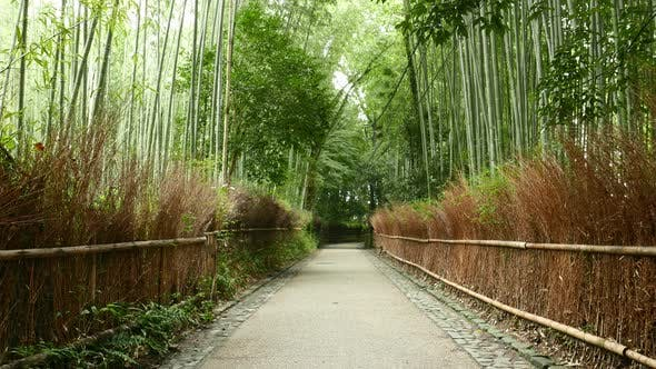Arashiyama Bamboo Forest in Kyoto of Japan