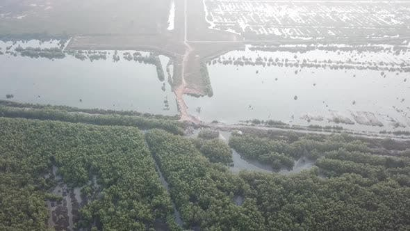 Aerial view mangrove tree. And the land after forest clearing at back.
