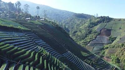 Beautiful Terracing