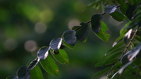 Thumbnail for Jungle Flora 3