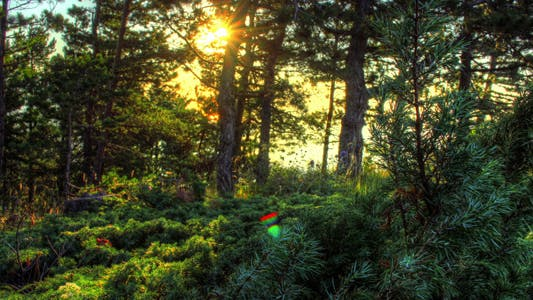 Cover Image for HDR Time Lapse Spring Sunrise In Forest