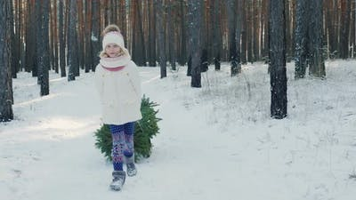 A Sweet Girl Is Carrying a New Year Tree in a Sled