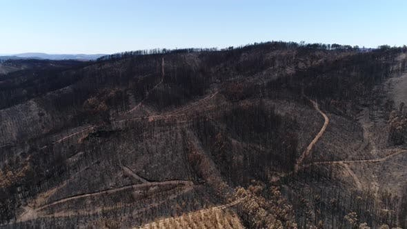 Thumbnail for Natural Park After Fire