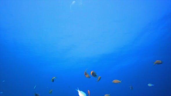 Thumbnail for Underwater Orange Fish Scenery