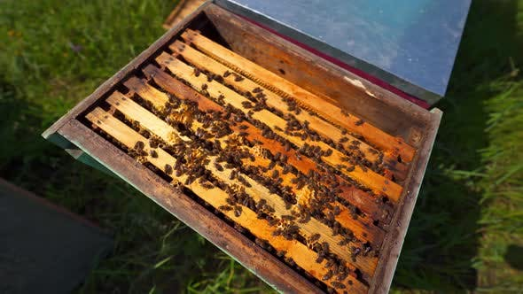 Thumbnail for Bees inside the hive
