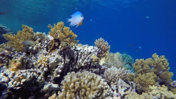 Tropical Underwater View