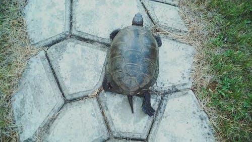 Turtle Walking on the Way