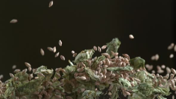 Hops and barley in super slow motion.  Shot on Phantom Flex 4K high speed camera.