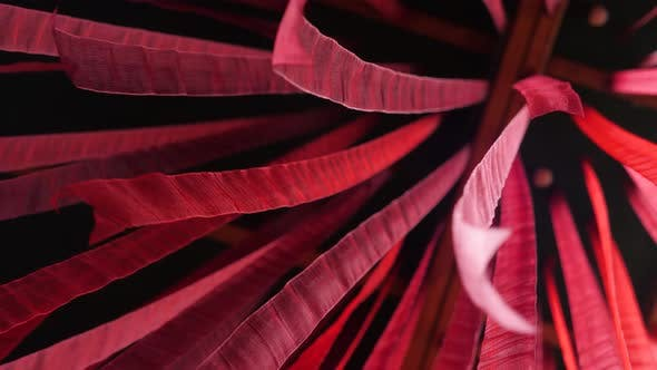 Red Silk Ribbon Waving Develops in the Wind. Red Fabric Animation. Abstract Wavy Black Background in