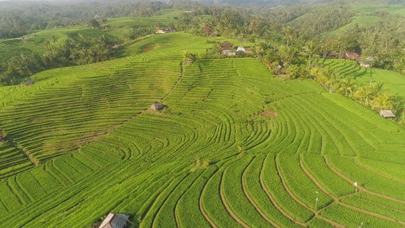 Thumbnail for Rice Fields with Agricultural Land in Indonesia