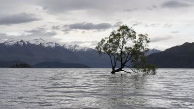 Timelapse Wanaka tree during cloudy