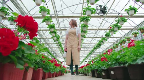 Female Greenhouse Worker Watering Colorful Flowers