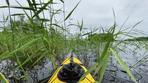 Sports Kayak Sails Across Bed of Green Rushes Under Grey Sky