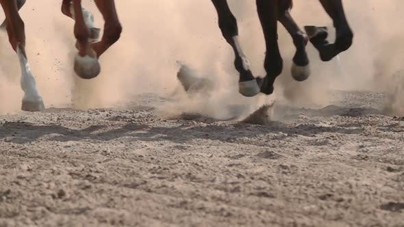 Thumbnail for The Feet of the Horses at the Racetrack
