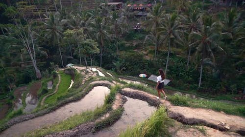 Travel Woman in Rice Field Exploring Lush Green Rice Terrace Walking in Cultural Landscape Exotic