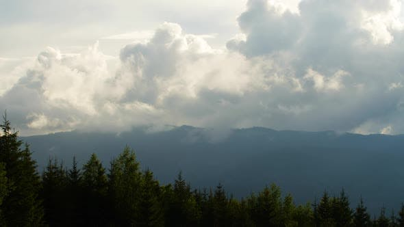 Cover Image for Misty Forest in Mountain. Marvelous View of Over Pine Forest in the Morning.