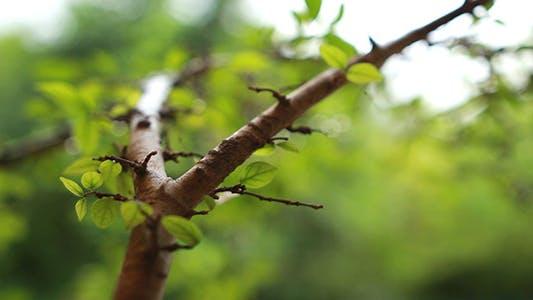 Thumbnail for Rain on Leaves