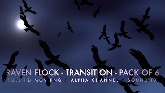 Thumbnail for Raven Flock - Transition - Pack of 6