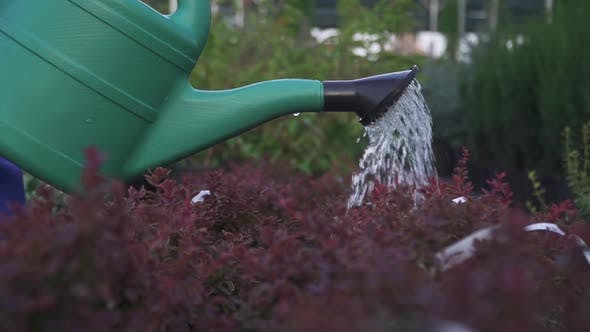 Thumbnail for Watering in the Garden