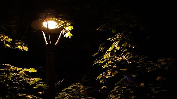 Thumbnail for Insects Around Street Lamp