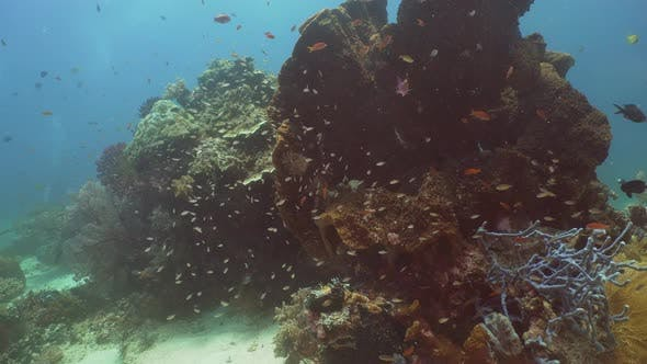 Thumbnail for Coral Reef and Tropical Fish. Bali,Indonesia.